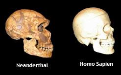 hominin-blog