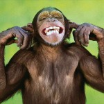 monkeys could talk blog
